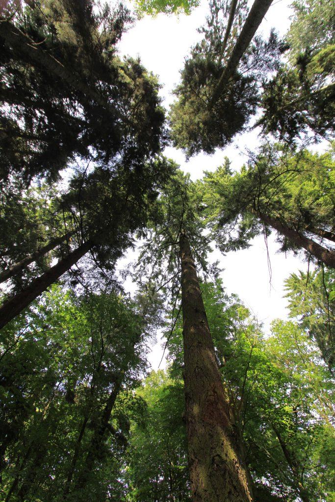 In der Waldkathedrale