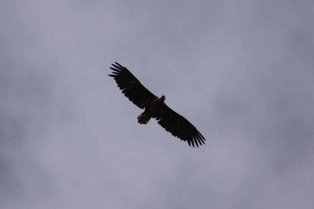 ... und über uns kreist der Fischadler