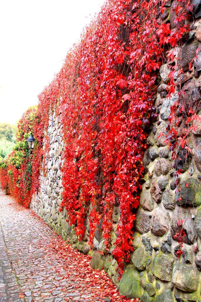 Die Blätter verfärben sich