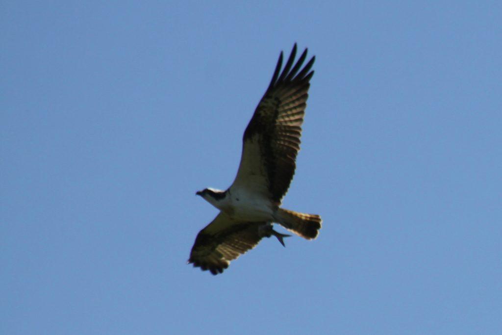 Die Adler-Flugshow